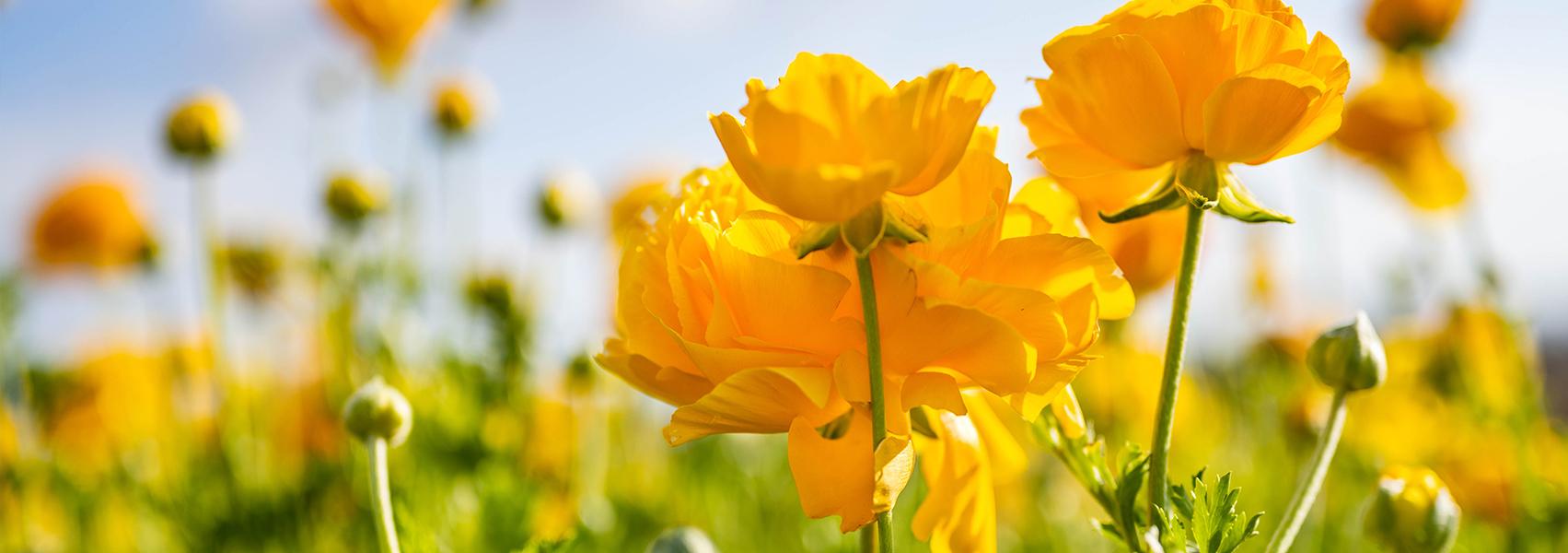 flower_Vol.2